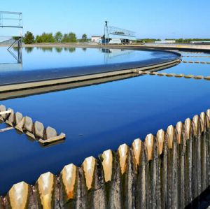 Wastewater Sludge Reduction